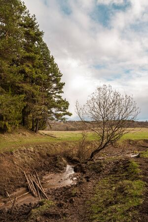 Rural landscape: dirty coast of a creek near the edge of a forest 版權商用圖片