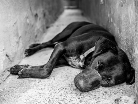 Black homeless dog with scar on face sleeping on old concrete floor on black and white style. Stock fotó