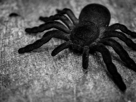 Black huge spider tarantula on cement floor background black and white style. Mysterious and horror house concept.
