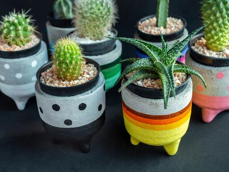 Colorful Cute Concrete Planters With Cactus And Succulent Plants