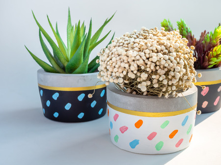 Colorful round geometric concrete planters with green succulent plant and flowers on white background. Modern beautiful painted concrete pot, home and garden decoration concept.