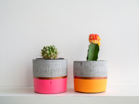 Colorful couple modern concrete planter with cactus plants on white shelf on white wall background. Painted concrete pots for home decoration minimalist style.