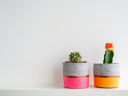 Colorful couple modern concrete planter with cactus plants on white shelf on white wall background with copy space. Painted concrete pots for home decoration minimalist style.