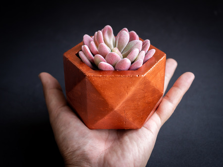Hand holding modern copper colour geometric hexagon concrete planter with beautiful pink succulent plant on dark background. Painted concrete pot for home decoration