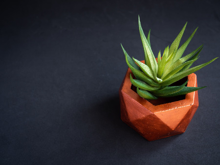 Modern copper colour geometric hexagon concrete planter with green succulent plant on dark background with copy space. Painted concrete pot for home decoration