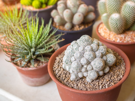 Close-up various of small cactus and succulent plant in plastic pots on white table.