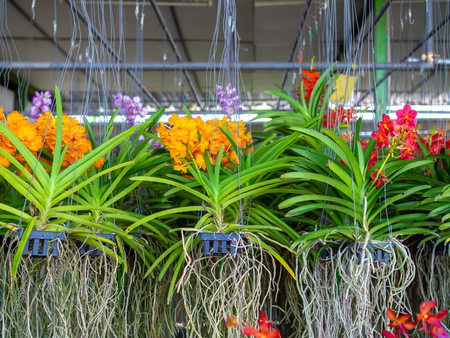 Mant hanging flowerpots with colorful flowers and green plants.