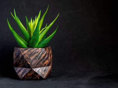 Brown wood pattern painted geometric concrete planter with green succulent plant on dark background with copy space. Painted concrete pots for home decoration Imagens