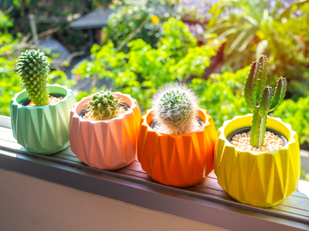 Colorful painted geometric concrete planters with cactus plant on the window on green nature background. Painted concrete pots for home decoration 版權商用圖片