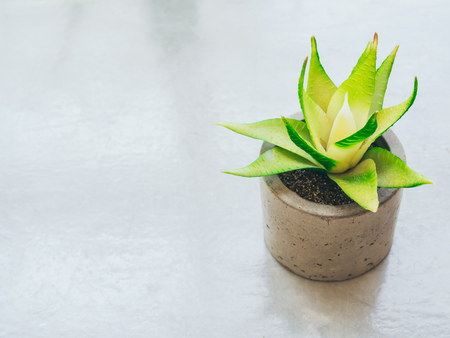 Small green succulent plant in concrete pot on cement background with copy space.
