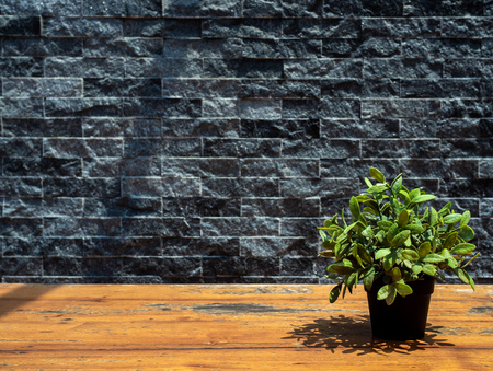 Green plant in black pot on wooden table on grey brick wall background with copy space.