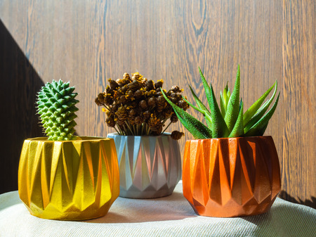Gold, silver and copper painted geometric concrete planters with cactus, dry flower and succulent plant on wooden background. Painted concrete pots for home decoration