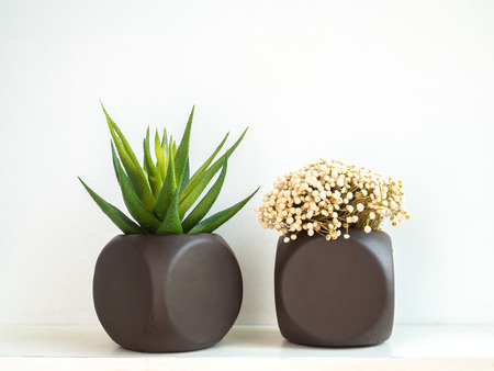 Two brown painted geometric concrete planters with succulent plant and flower isolated on white wall background. Painted concrete pots for home decoration
