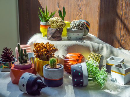 Various flowers and cactus plants with many geometric concrete planters on white fabric on wooden background. Painted concrete pots for home decoration