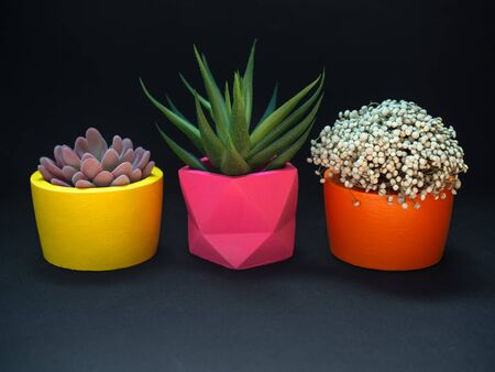 Beautiful various geometric concrete planters with cactus, flower and succulent plant on dark background. Colorful painted concrete pots for home decoration