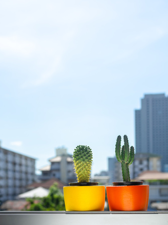 Beautiful round concrete planters with cactus plant on the window on cityscape background with copy space. Colorful painted concrete pots for home decoration vertical style. Éditoriale