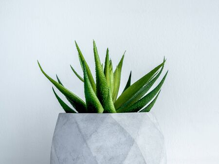 Concrete pot. Close-up green succulent plant in modern geometric concrete planter on wooden shelf isolated on white background.