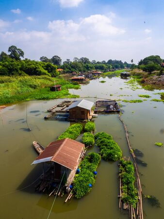 Top view of pandan plant floating farm in plant floating on a Sakaekrung river in Uthai Thani, Thailand. Local traditional pandan farming. Beautiful riverscape vertical style. Stock Photo