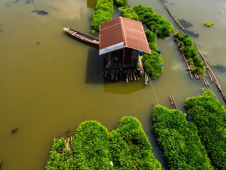 Top view of pandan plant floating farm in plant floating on a Sakaekrung river in Uthai Thani, Thailand. Local traditional pandan farming. Beautiful riverscape.