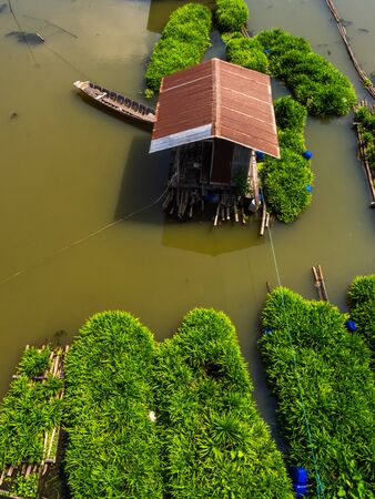 Top view of pandan plant floating farm in plant floating on a Sakaekrung river in Uthai Thani, Thailand. Local traditional pandan farming. Beautiful riverscape vertical stlye.