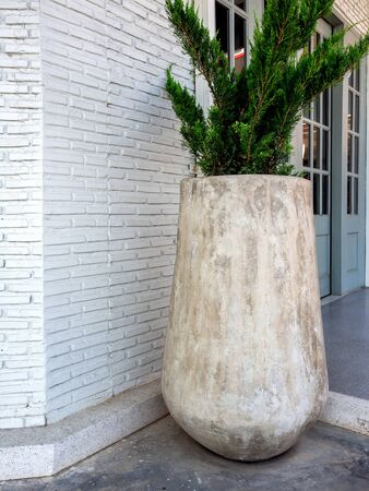 Large high concrete pot with  green pine tree on cement floor near the white brick wall vertical style.