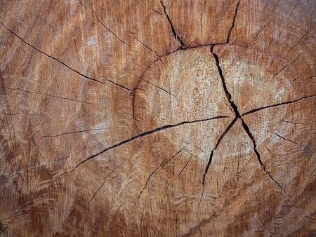 Tree stump texture background. Abstract brown cracked wood background.