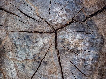 Tree stump texture background. Abstract old brown cracked wood background.