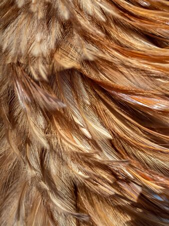 Close-up feather duster texture background. Brown broom brush is made of chicken feathers.