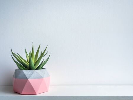 Cactus pot. Concrete pot. Pink modern geometric concrete planters with green succulent plant on white wooden shelf isolated on white background with copy space.