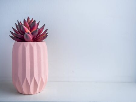 Cactus pot. Concrete pot. Beautiful pink modern geometric concrete planter with red succulent plant on white wooden shelf on white background with copy space.