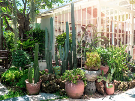 Cactus garden outdoor. Many cactus and succulent plant in pots arranged in front of white greenhouse with sunshine in the morning.