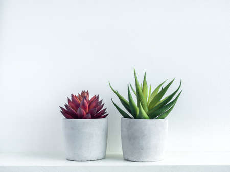 Red and green succulent plants in modern geometric cement planters on white wood shelf on white background. Concrete pots, round shape.