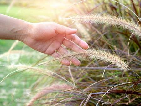 Woman's hand touching wild grass. Close up hand feeling the meadow.