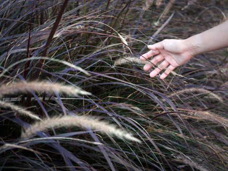 Wild grass feild with woman's hand touching. Close up hand feeling the meadow.