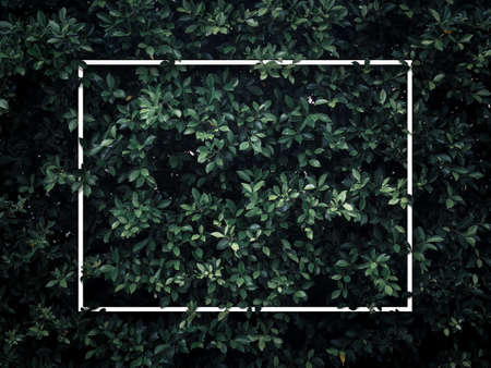 White blank square frame on green leaves background, dark tone. Empty text space for advertising, invitation card, poster nature concept.