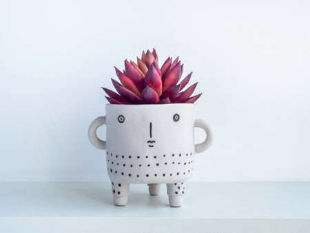 Cute face ceramic plant pot with red succulent plant on white wooden shelf isolated on white wall background. Small modern DIY cement planter trendy decoration. Stockfoto
