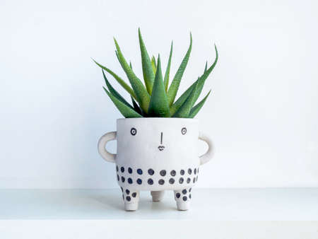 Cute face ceramic plant pot with green succulent plant on white wooden shelf isolated on white wall background. Small modern DIY cement planter trendy decoration.