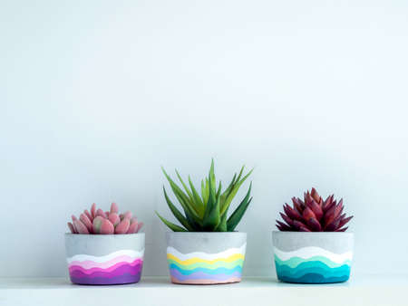 Colorful DIY round concrete pot with beautiful green, pink and red succulent plants on a white wooden shelf on white wall background with copy space. Three unique painted cement planters.