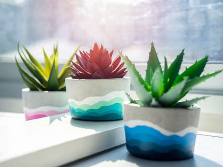 Colorful DIY round concrete pots with green and red succulent plants on a white wooden shelf on white wall near glass window. Close-up three unique colorful color painted cement planters. Stockfoto