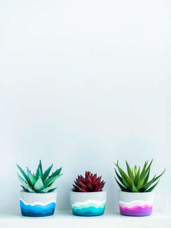 Colorful DIY round concrete pots with green and red succulent plants on a white wooden shelf on white wall background with copy space. Unique colorful color painted cement planters, vertical style. Stockfoto