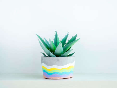 Colorful DIY round concrete pot with green succulent plant on a white wooden shelf on white wall background. Unique rainbow color painted cement planter.