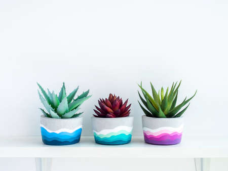 Colorful DIY round concrete pots with green and red succulent plants on a white wooden shelf on white wall background with copy space. Unique colorful color painted cement planters.