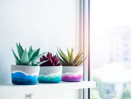 Colorful DIY round concrete pots with green and red succulent plants on a white wooden shelf on white wall near glass window with copy space. Three unique colorful color painted cement planters.