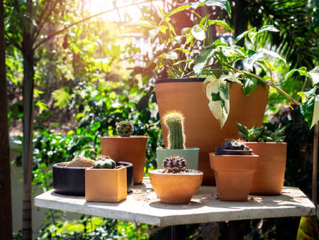 Outdoor garden with cactus and various green plants in many pots on the table in the garden with sunshine in the morning.