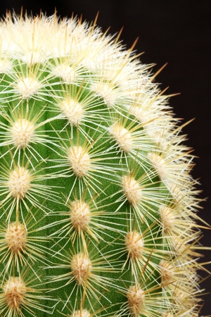 Cactus Close Up Imagens