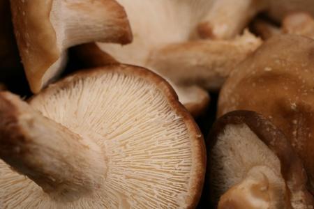 Shiitake Mushrooms Close Up Stock Photo - 22496126