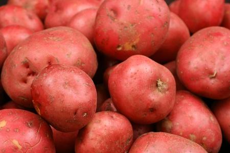 赤いジャガイモをクローズ アップ 写真素材 - 22496337