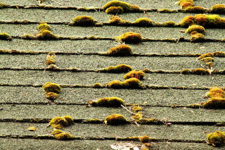 Mossy, neglected roof shingles Imagens