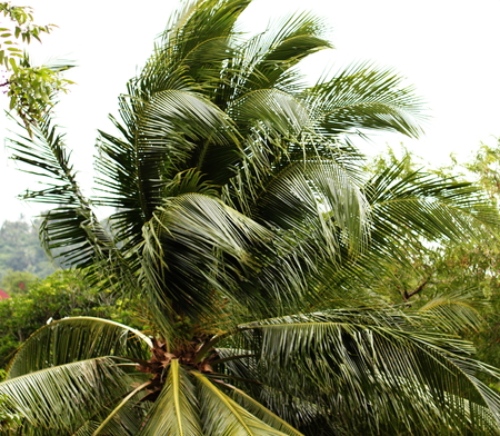 Palm During A Typhoon Imagens