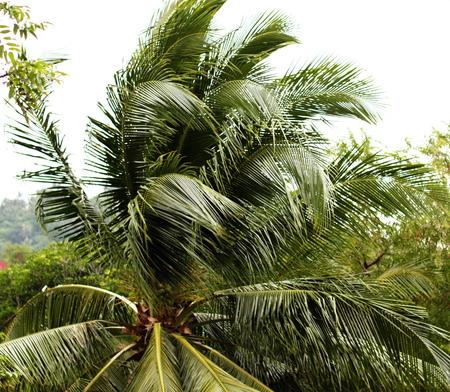 Palm During A Typhoon Reklamní fotografie